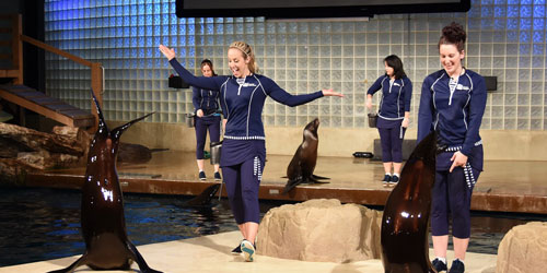 California Sealion Show 500x250 - Mystic Aquarium - Mystic, CT