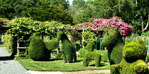 Green Animals Topiary Garden Portsmouth RI