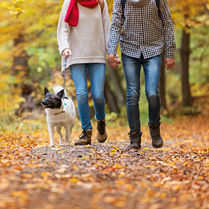 Pet and Dog Friendly Lodgings in New England