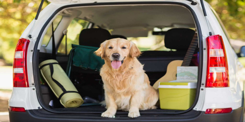 Goldie in the Trunk - Sheepscot Harbor Vacation Club - Edgecomb, ME