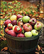 New England Apples