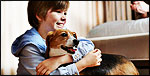 Sheraton Commander Hotel - Pet Friendly