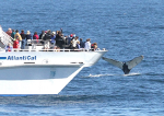 Whale Watching - Harborside Hotel, Spa & Marina - Bar Harbor, ME