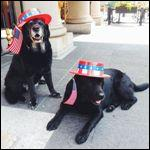 Patriotic Black Labs