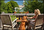pet friendly - Inn at Weston